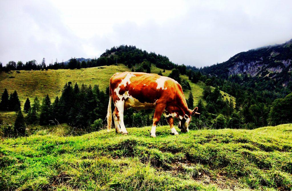 Die Kuh kann auch nicht alles an einem Tag fressen.